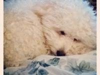 Cutest Pet Contest 2013